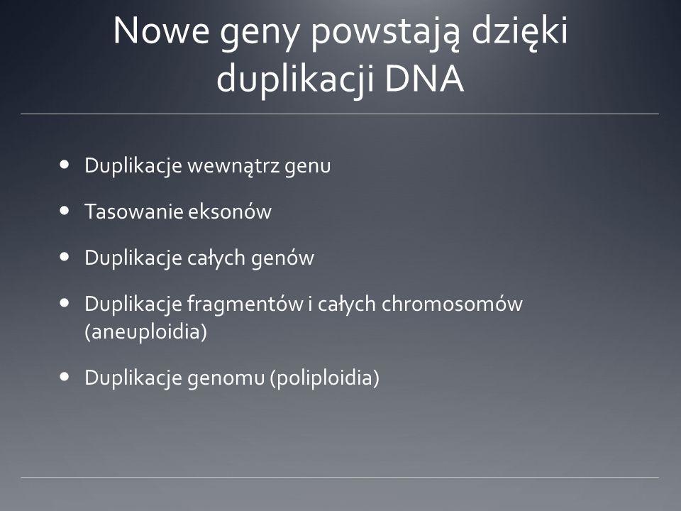 Nowe geny powstają dzięki duplikacji DNA