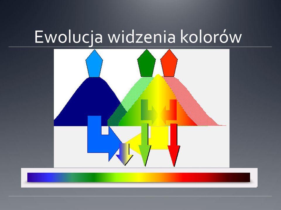 Ewolucja widzenia kolorów
