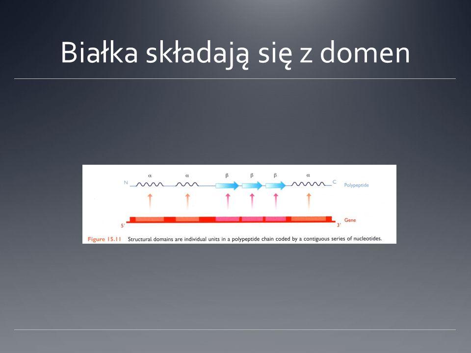 Białka składają się z domen