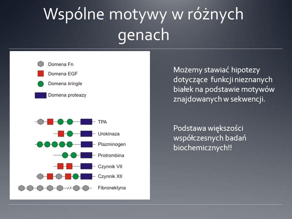 Wspólne motywy w różnych genach