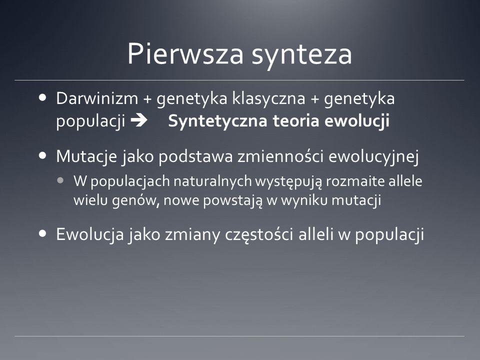 Pierwsza synteza Darwinizm + genetyka klasyczna + genetyka populacji  Syntetyczna teoria ewolucji.