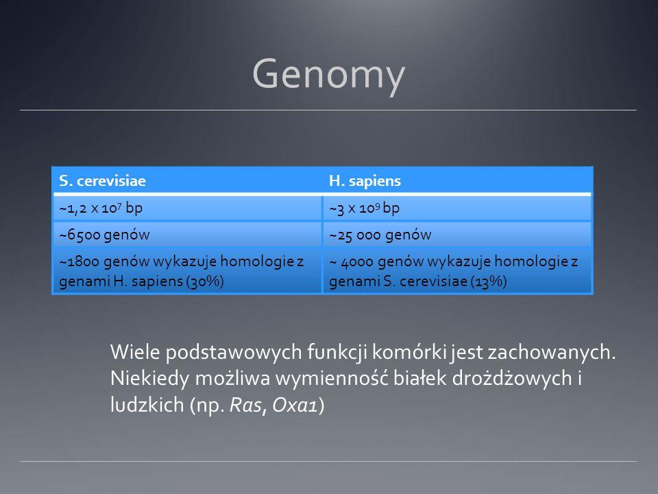 Genomy Wiele podstawowych funkcji komórki jest zachowanych.
