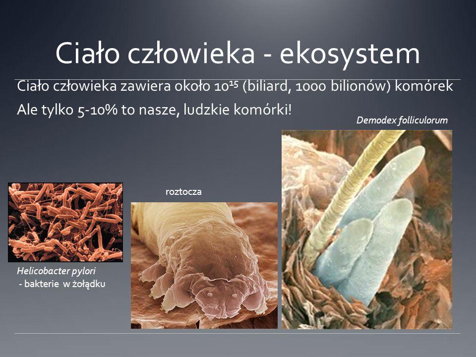 Ciało człowieka - ekosystem