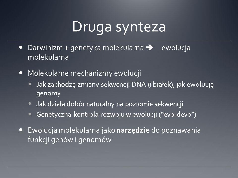 Druga synteza Darwinizm + genetyka molekularna  ewolucja molekularna