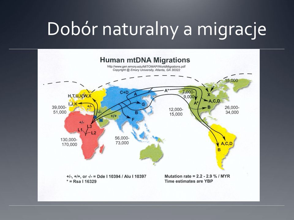 Dobór naturalny a migracje