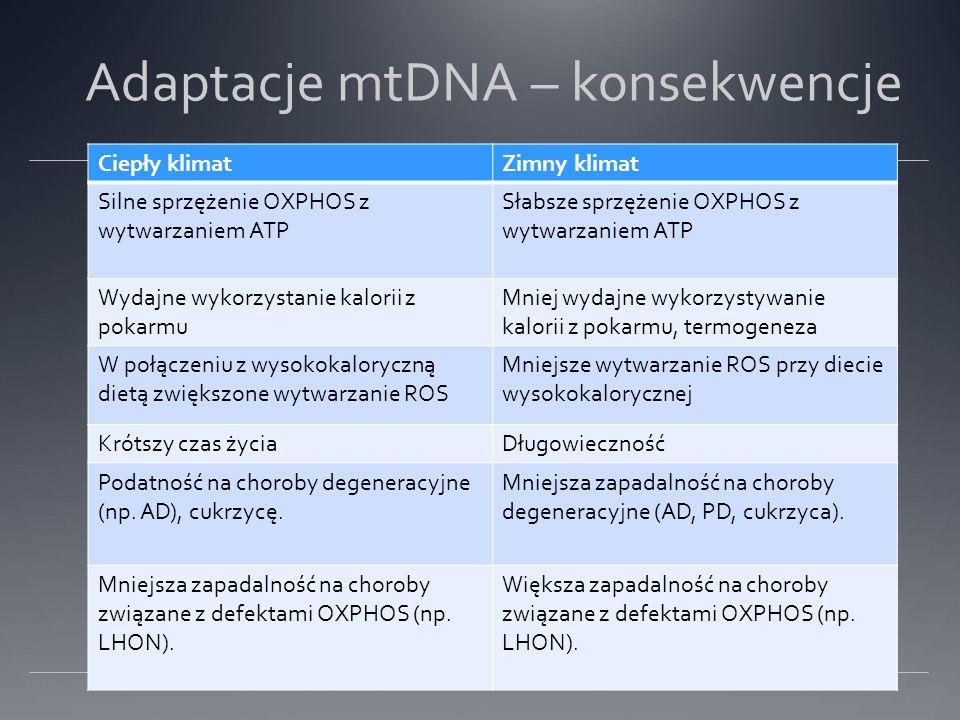 Adaptacje mtDNA – konsekwencje