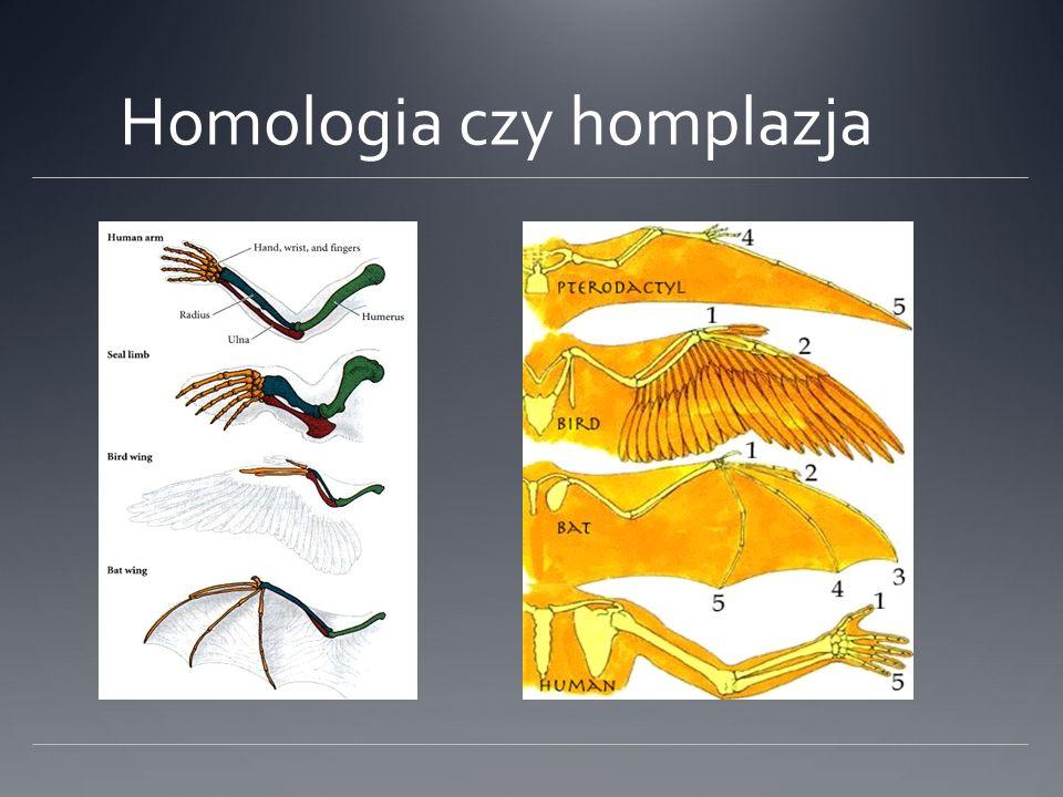 Homologia czy homplazja