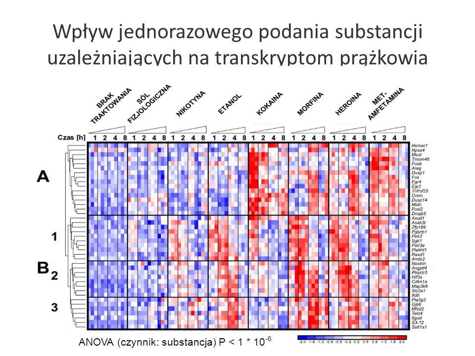 Wpływ jednorazowego podania substancji uzależniających na transkryptom prążkowia