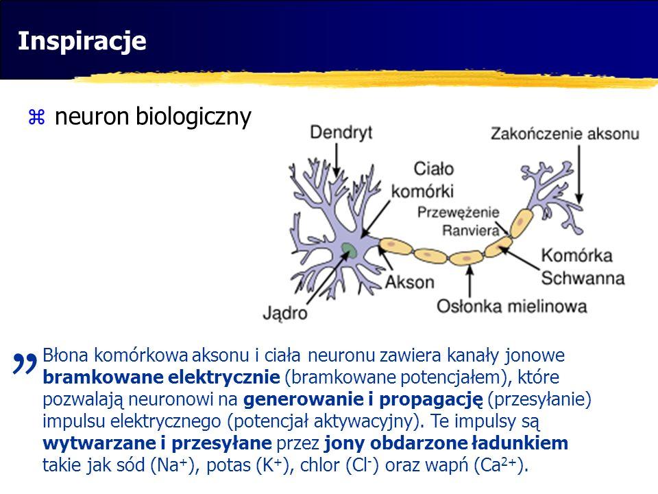 """"""" Inspiracje neuron biologiczny"""