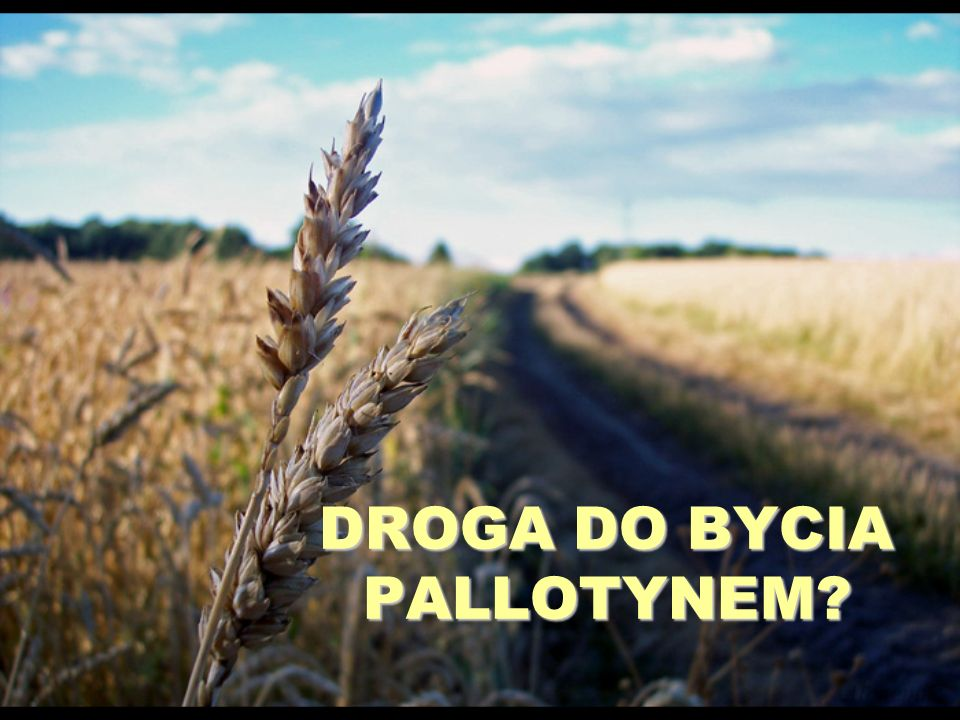 DROGA DO BYCIA PALLOTYNEM