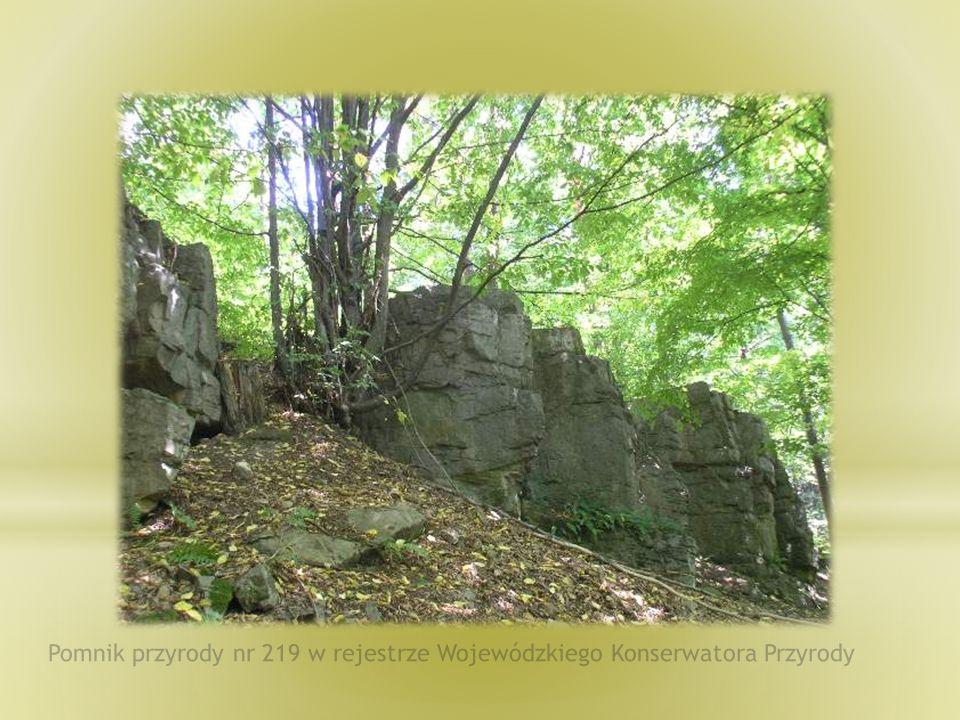 Pomnik przyrody nr 219 w rejestrze Wojewódzkiego Konserwatora Przyrody