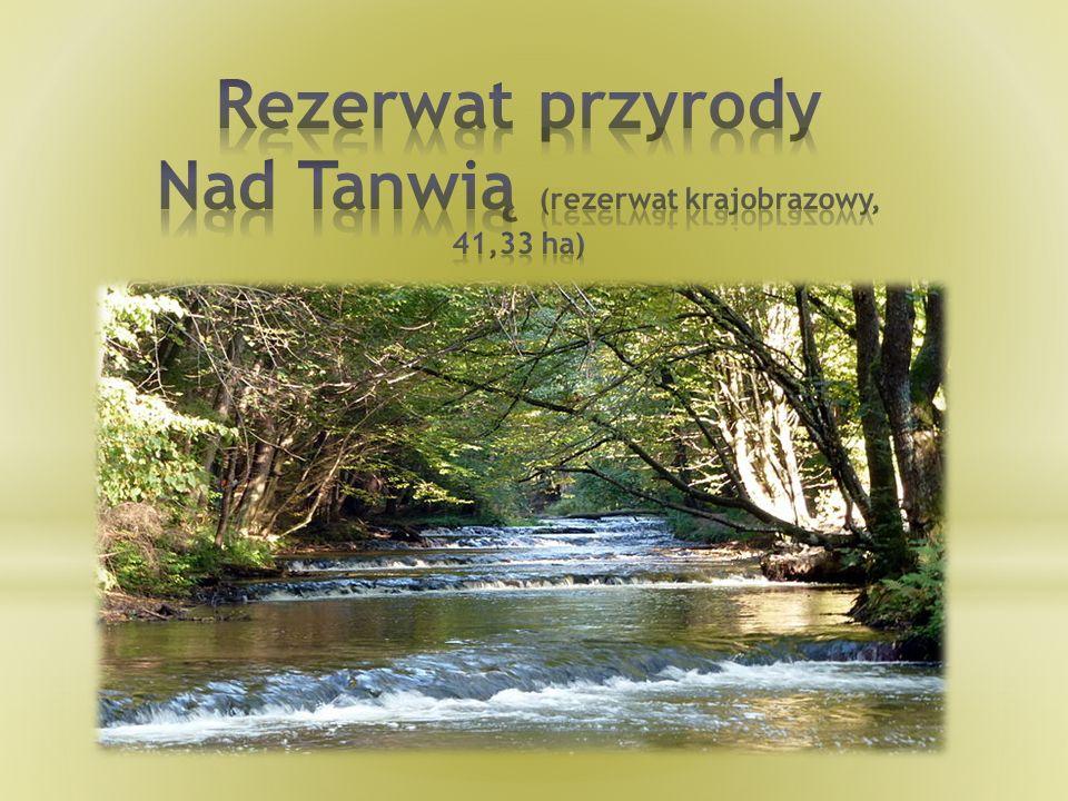 Rezerwat przyrody Nad Tanwią (rezerwat krajobrazowy, 41,33 ha)
