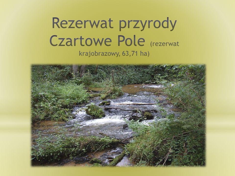 Rezerwat przyrody Czartowe Pole (rezerwat krajobrazowy, 63,71 ha)