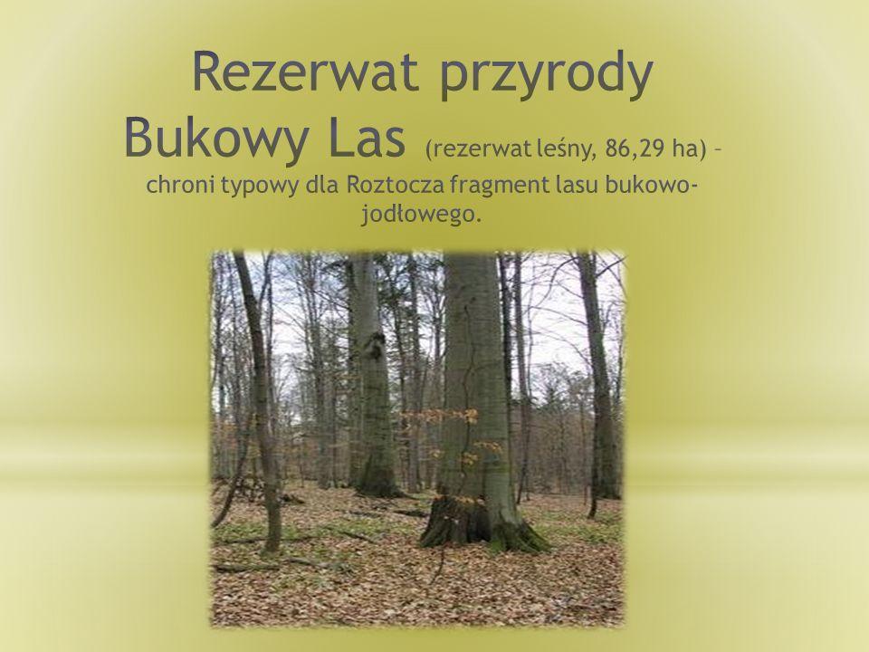 Rezerwat przyrody Bukowy Las (rezerwat leśny, 86,29 ha) – chroni typowy dla Roztocza fragment lasu bukowo-jodłowego.