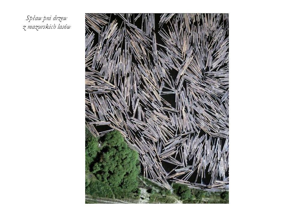 Spław pni drzew z mazurskich lasów