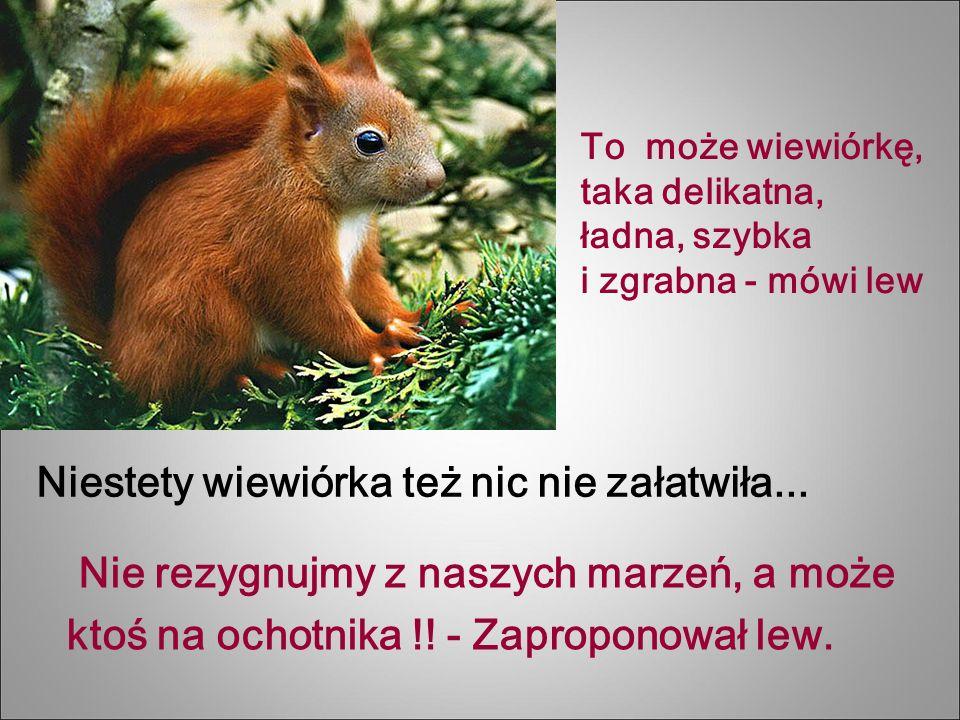 Niestety wiewiórka też nic nie załatwiła...