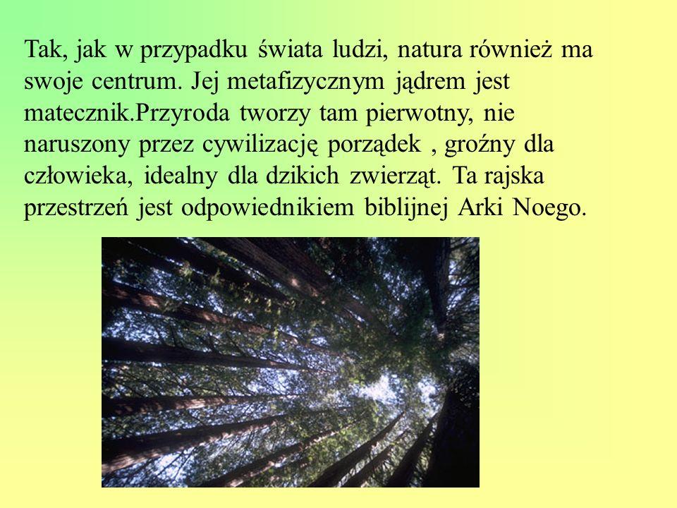 Tak, jak w przypadku świata ludzi, natura również ma swoje centrum