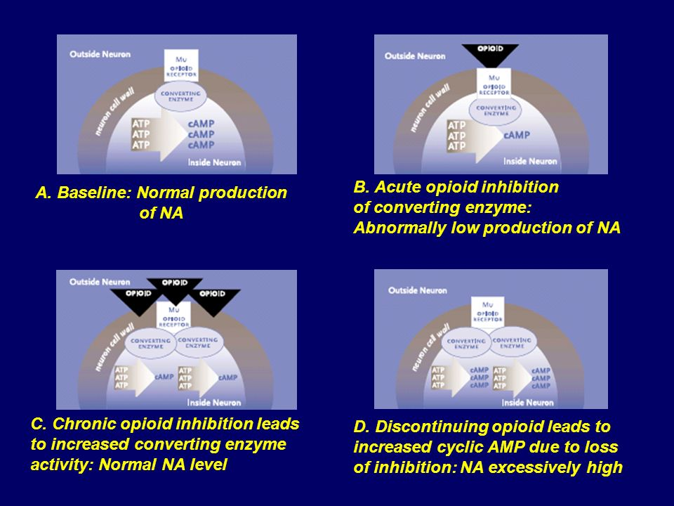 A. Baseline: Normal production of NA