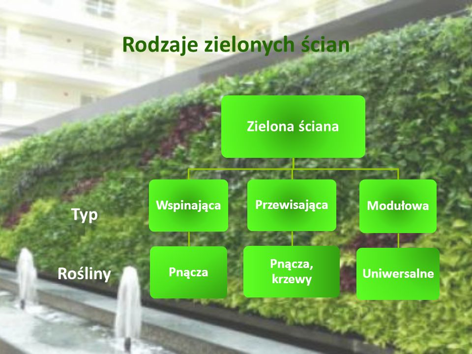 Rodzaje zielonych ścian
