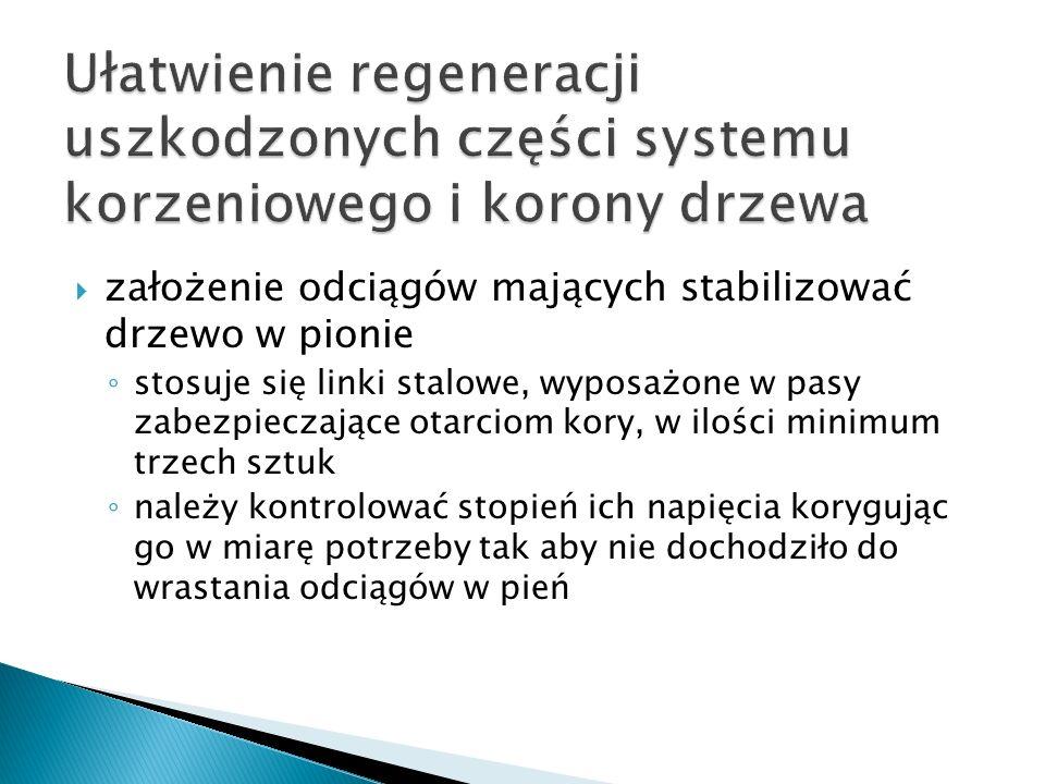 Ułatwienie regeneracji uszkodzonych części systemu korzeniowego i korony drzewa