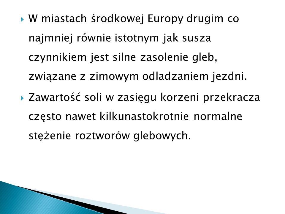 W miastach środkowej Europy drugim co najmniej równie istotnym jak susza czynnikiem jest silne zasolenie gleb, związane z zimowym odladzaniem jezdni.