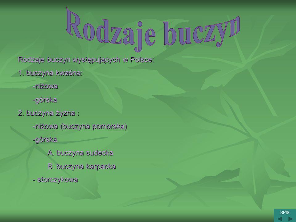 Rodzaje buczyn Rodzaje buczyn występujących w Polsce: