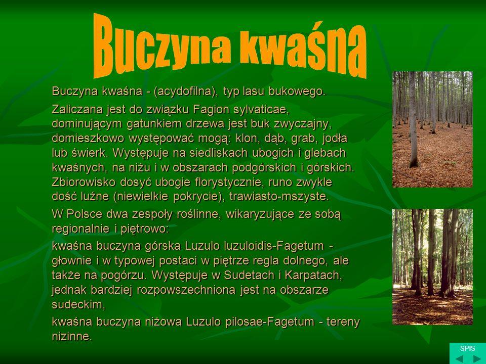 Buczyna kwaśna Buczyna kwaśna - (acydofilna), typ lasu bukowego.