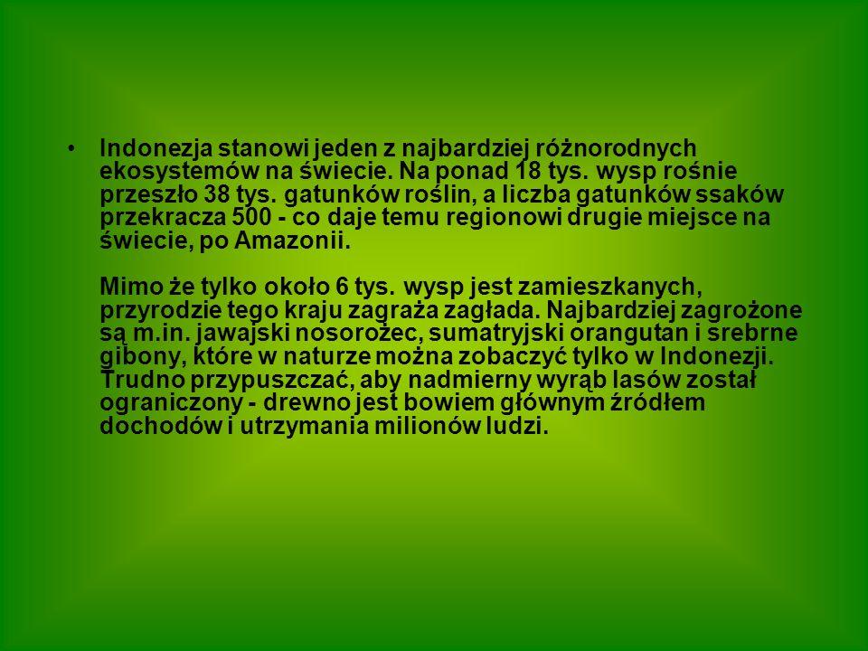 Indonezja stanowi jeden z najbardziej różnorodnych ekosystemów na świecie.