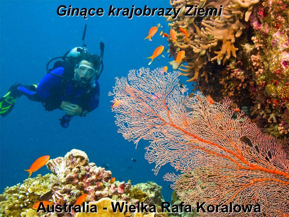 Ginące krajobrazy Ziemi Australia - Wielka Rafa Koralowa
