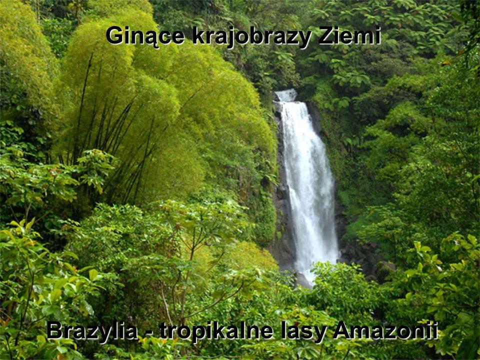 Brazylia - tropikalne lasy Amazonii
