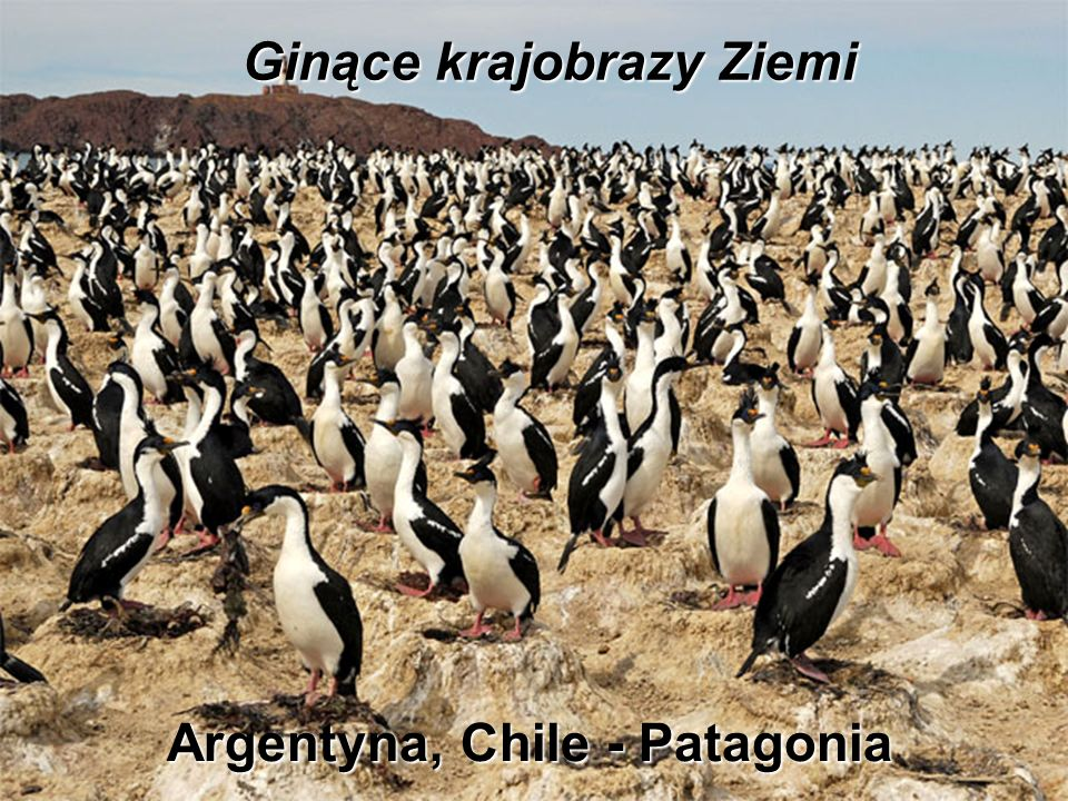 Argentyna, Chile - Patagonia