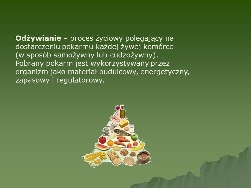 Odżywianie – proces życiowy polegający na dostarczeniu pokarmu każdej żywej komórce (w sposób samożywny lub cudzożywny).