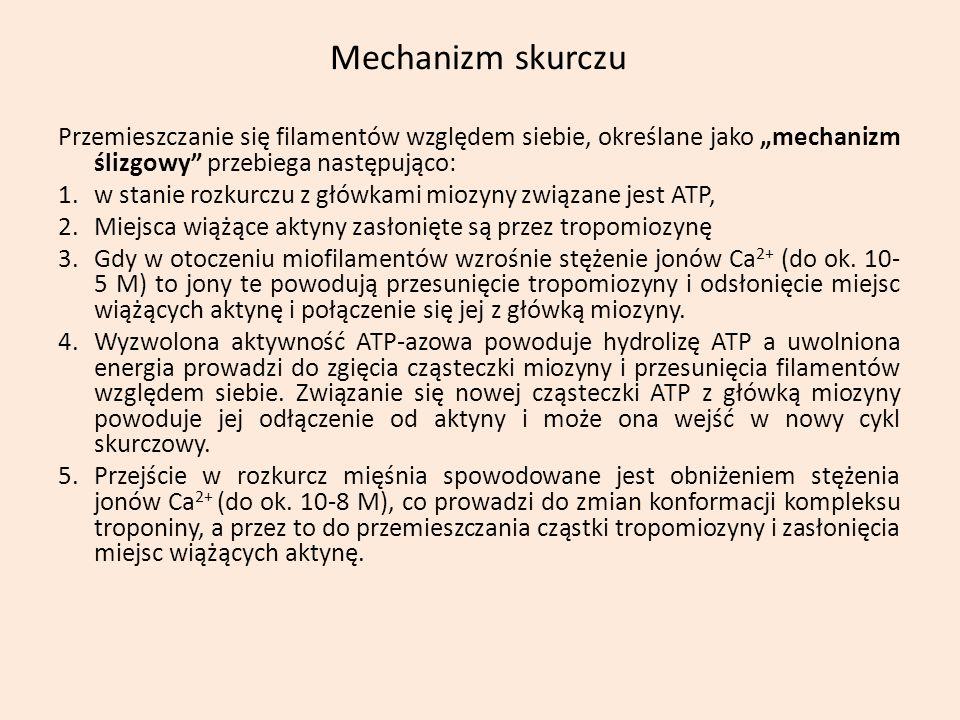 """Mechanizm skurczu Przemieszczanie się filamentów względem siebie, określane jako """"mechanizm ślizgowy przebiega następująco:"""