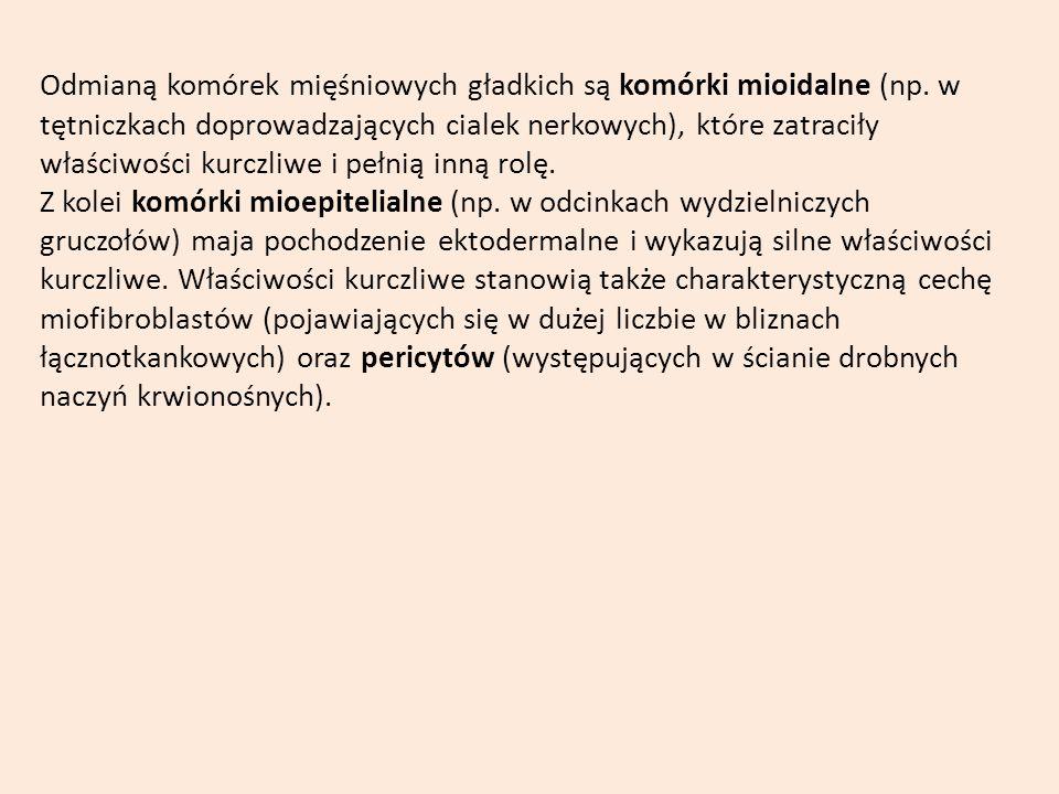 Odmianą komórek mięśniowych gładkich są komórki mioidalne (np