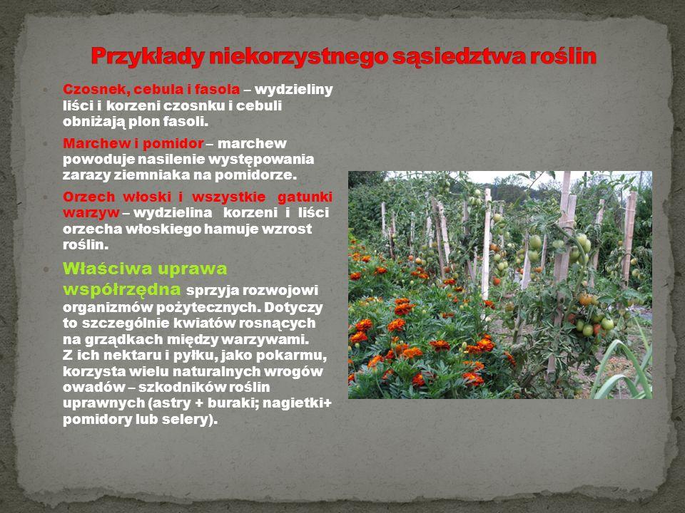 Przykłady niekorzystnego sąsiedztwa roślin