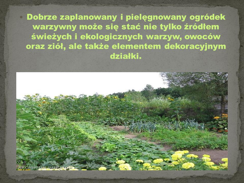Dobrze zaplanowany i pielęgnowany ogródek warzywny może się stać nie tylko źródłem świeżych i ekologicznych warzyw, owoców oraz ziół, ale także elementem dekoracyjnym działki.