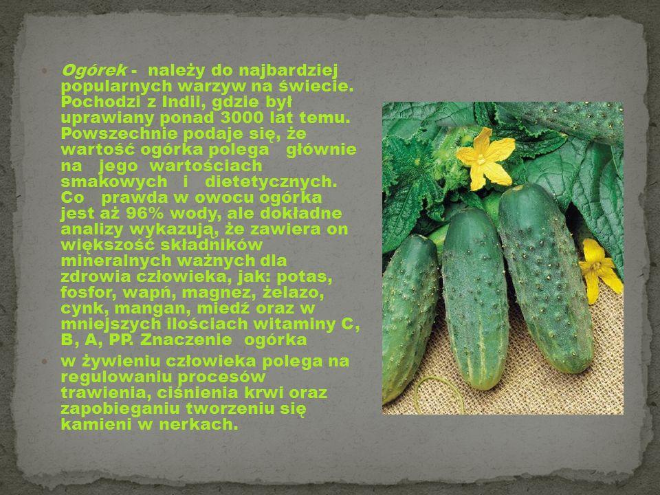 Ogórek - należy do najbardziej popularnych warzyw na świecie