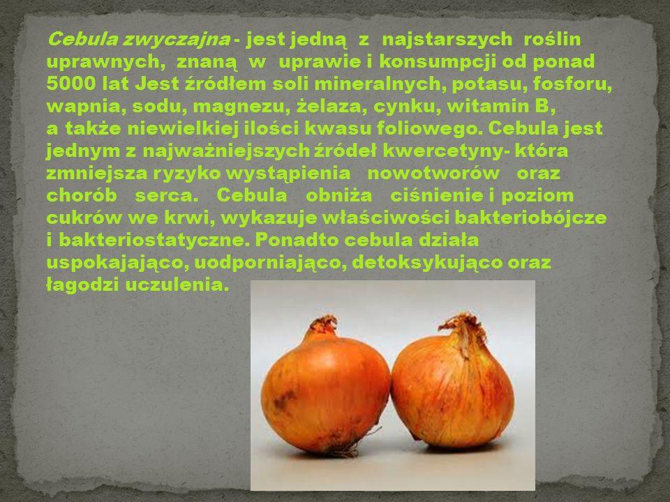 Cebula zwyczajna - jest jedną z najstarszych roślin uprawnych, znaną w uprawie i konsumpcji od ponad 5000 lat Jest źródłem soli mineralnych, potasu, fosforu, wapnia, sodu, magnezu, żelaza, cynku, witamin B,
