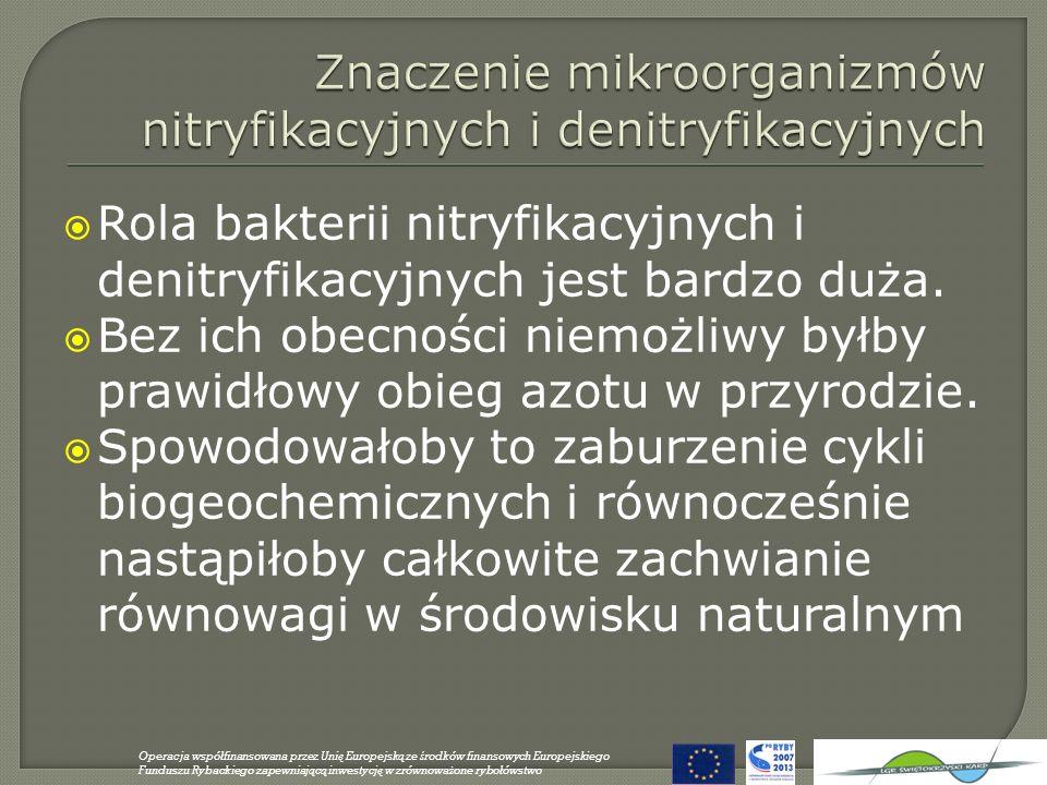 Znaczenie mikroorganizmów nitryfikacyjnych i denitryfikacyjnych