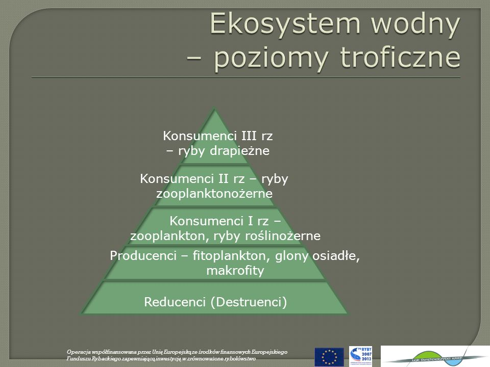 Ekosystem wodny – poziomy troficzne