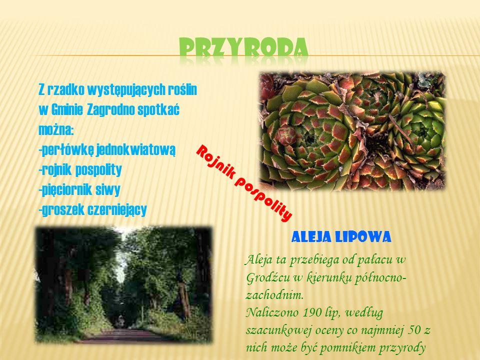 Przyroda Z rzadko występujących roślin w Gminie Zagrodno spotkać można: -perłówkę jednokwiatową. -rojnik pospolity.