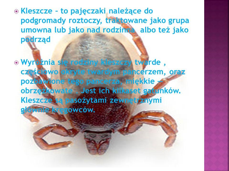Kleszcze – to pajęczaki należące do podgromady roztoczy, traktowane jako grupa umowna lub jako nad rodzinna albo też jako podrząd