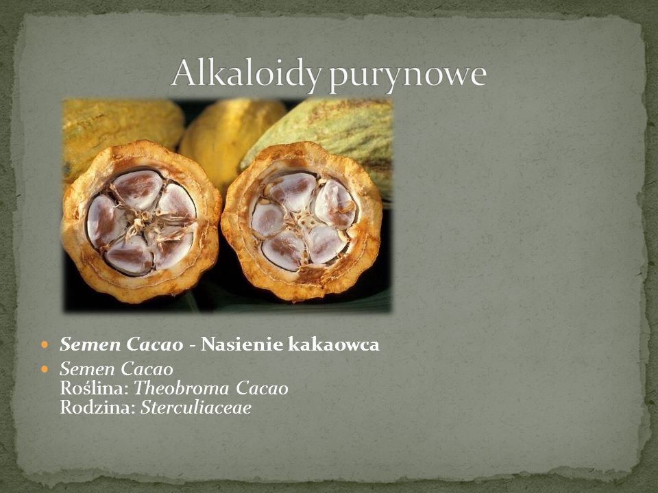 Alkaloidy purynowe Semen Cacao - Nasienie kakaowca