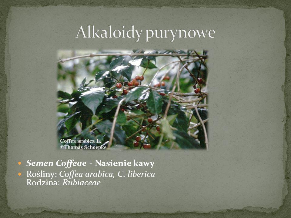 Alkaloidy purynowe Semen Coffeae - Nasienie kawy