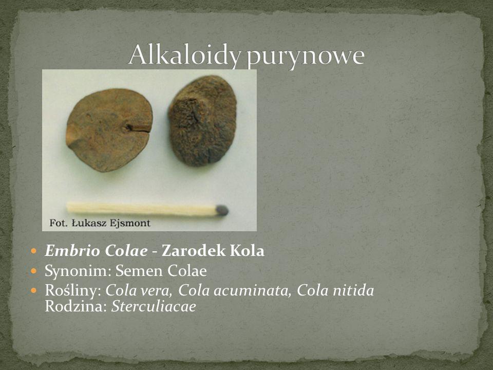 Alkaloidy purynowe Embrio Colae - Zarodek Kola Synonim: Semen Colae