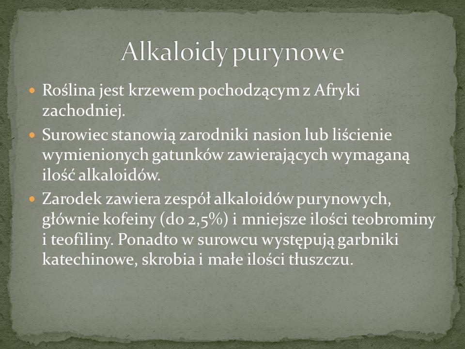 Alkaloidy purynowe Roślina jest krzewem pochodzącym z Afryki zachodniej.