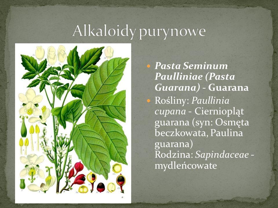Alkaloidy purynowe Pasta Seminum Paulliniae (Pasta Guarana) - Guarana