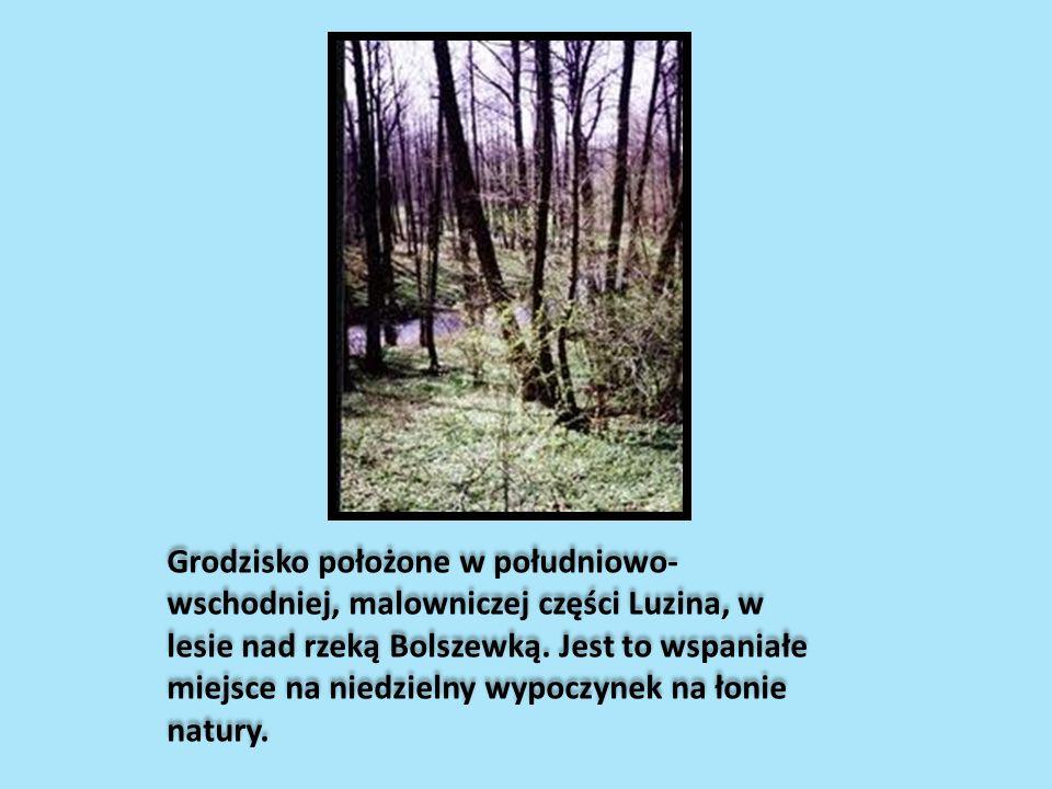 Grodzisko położone w południowo-wschodniej, malowniczej części Luzina, w lesie nad rzeką Bolszewką.