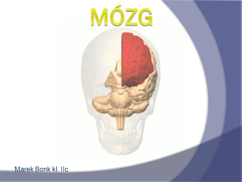 Mózg Marek Bonk kl. IIc