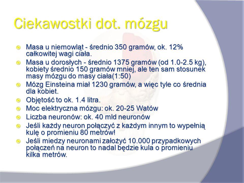 Ciekawostki dot. mózgu Masa u niemowląt - średnio 350 gramów, ok. 12% całkowitej wagi ciała.